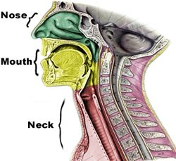 Head and Neck Rehabilitation